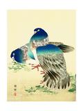 Blue Pigeons Reproduction procédé giclée par Bairei Kono