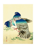 Blue Pigeons Giclee Print by Bairei Kono