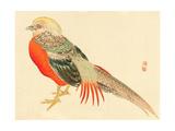 Bairei Gadan - Chinese Pheasant Giclee Print by Bairei Kono