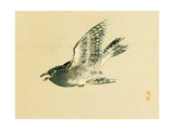 Cuckoo Impression giclée par Bairei Kono
