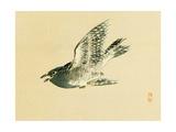 Cuckoo Giclee Print by Bairei Kono