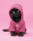 Wildside - Cat in a Hoody Posters