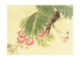 Flowers and Birds Picture Album by Bairei No.6 Giclee Print by Bairei Kono