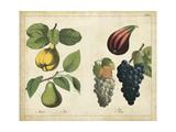 Kitchen Fruits IV Prints