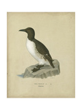 Antique Penguin II Posters by Von Wright