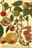 Weinmann Fruits II Posters