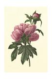 Boudoir Flower III Art
