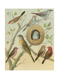 Birdwatcher's Delight I Prints by  Cassell