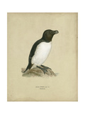 Antique Penguin I Art by Von Wright