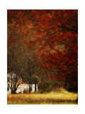 Beyond October's Maple Print by Danny Head