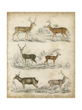 Non-Embellished Species of Deer Prints