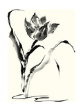 Studies in Ink - Tulip Poster by Nan Rae