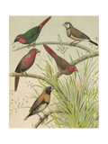 Birdwatcher's Delight III Print by  Cassell