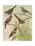 Birdwatcher's Delight III Print by  Cassell