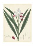 Splendors of Botany XI Prints
