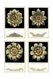 Mini Rosettes Premium Giclee Print