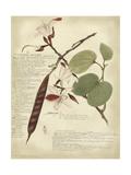 Descube Botanical III Kunstdrucke