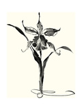Studies in Ink - Cattleya Poster by Nan Rae