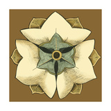 Small Floral Mandala on Caramel III Giclee Print by June Erica Vess