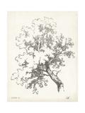 Oak Tree Study Kunst