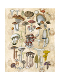 Mycological Study Prints by Naomi McCavitt