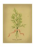 Herb Series V Prints