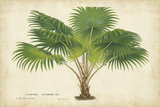 Palm of the Tropics V Poster af Horto Van Houtteano