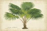Palm of the Tropics V Obra de arte por Horto Van Houtteano