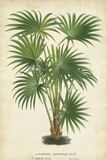 Palm of the Tropics IV Prints by  Van Houtteano