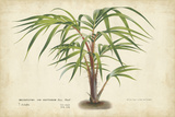 Palm of the Tropics VI Prints by  Van Houtteano