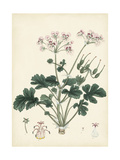 Splendors of Botany IX Prints