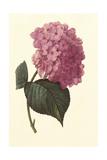 Boudoir Flower II Premium Giclee Print