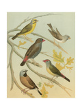 Birdwatcher's Delight IV Prints by  Cassell
