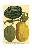 Antique Melons I Prints