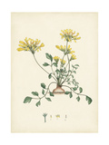 Splendors of Botany VIII Print