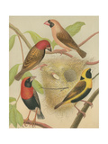 Birdwatcher's Delight II Prints by  Cassell