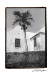 Bermuda Shade Prints by Laura Denardo