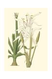 Curtis Floral IV Poster
