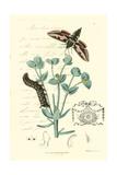 Naturalist's Montage I Prints by  Vision Studio