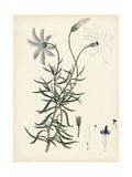 Splendors of Botany II Posters