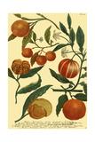 Weinmann Fruits III Kunstdrucke
