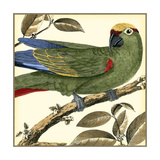 Tropical Parrot I Posters by  Martinet