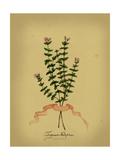 Herb Series VI Posters