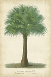 Horto Van Houtteano - Palm of the Tropics I - Poster