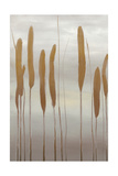 Reeds and Leaves II Posters by Jennifer Goldberger