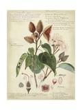 Descube Botanical V Posters