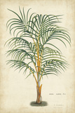 Palm of the Tropics III Posters af Horto Van Houtteano