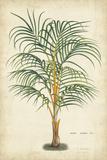 Horto Van Houtteano - Palm of the Tropics III - Poster
