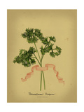 Herb Series II Poster