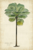 Horto Van Houtteano - Palm of the Tropics II - Art Print